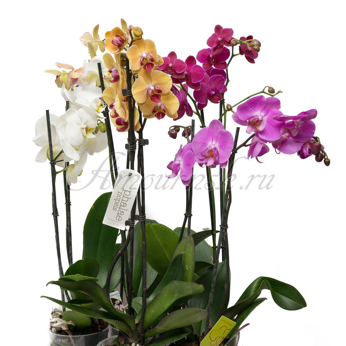 Домашние цветы новосибирск купить купить подарок мужчине харьков