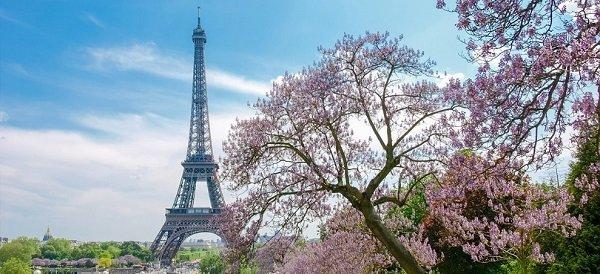 Сакура на фоне Эйфелевой башни