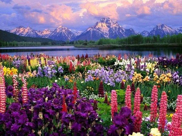 Цветочная долина в Гималаях