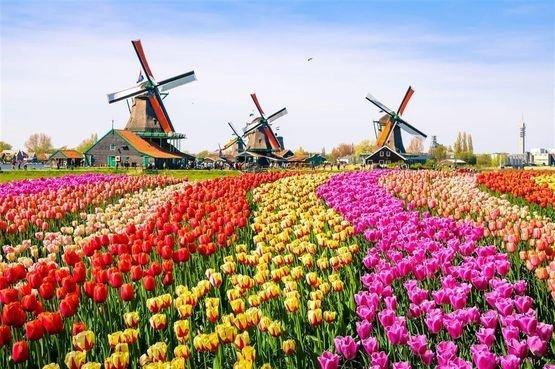 Голландский парк Кёхенхоф