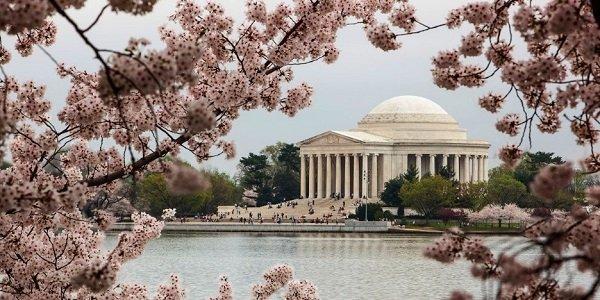 Сакура в Вашингтоне